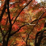 竹谷山紅葉写真